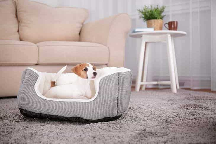 best memory foam dog bed