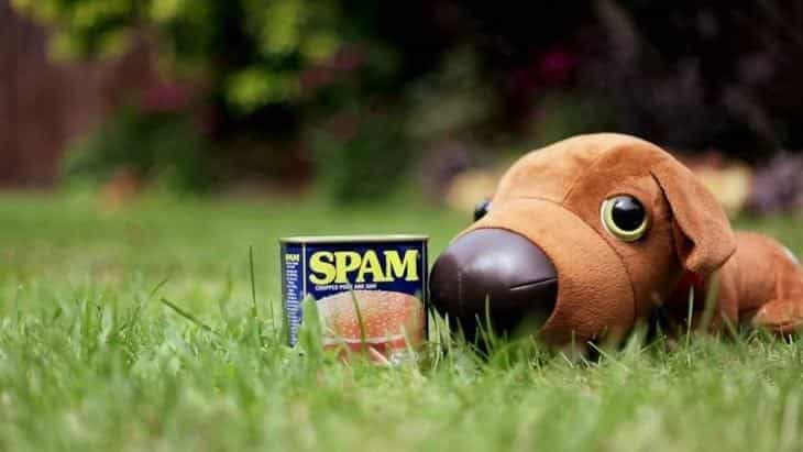 can dogs eat spam