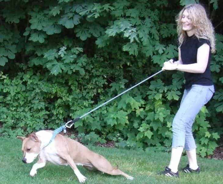 dog pulling on leash