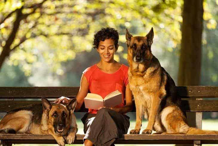 reading a book with dogs on bench