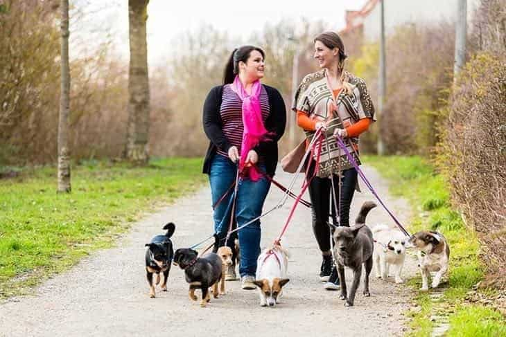 dog walkers enjoying the day