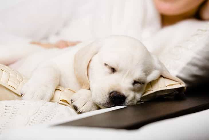 how much do puppies sleep at 8 weeks