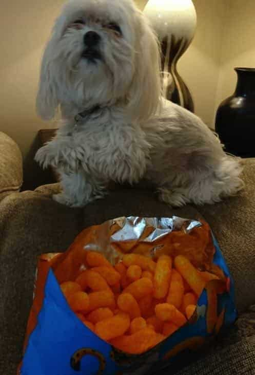 Sassy begging for cheetos