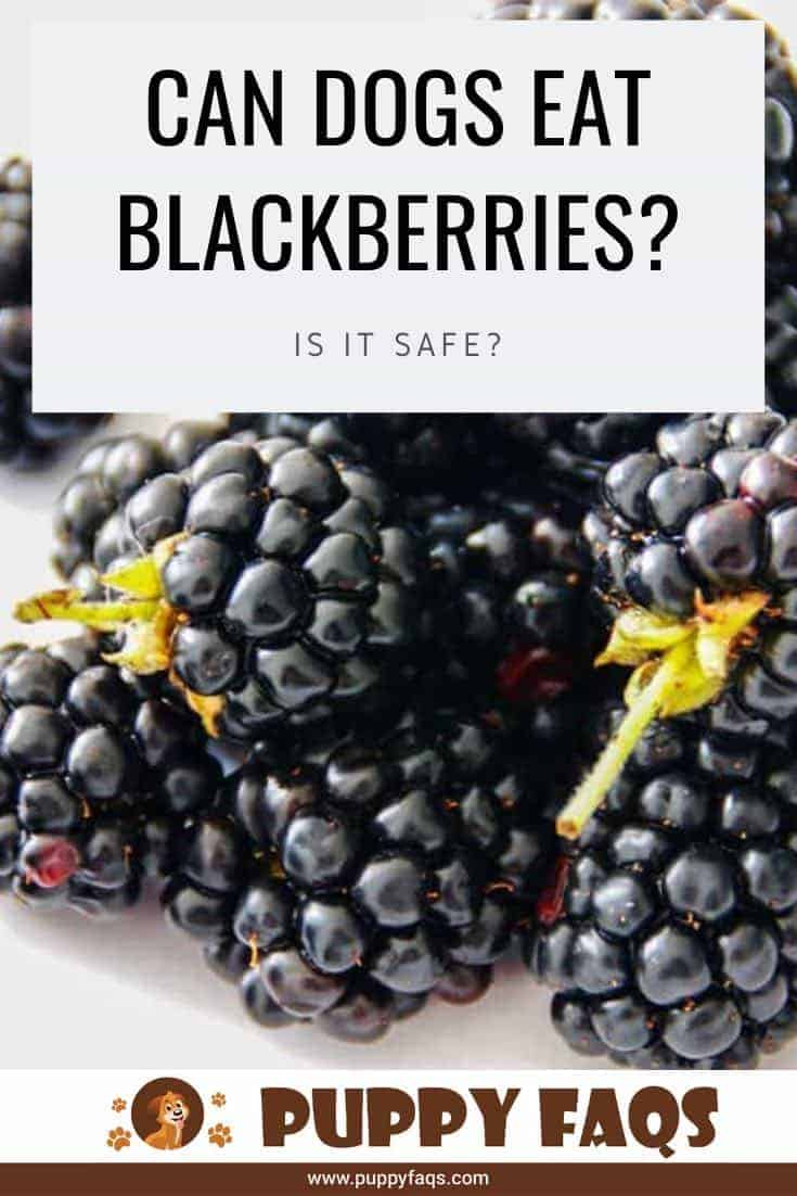 can dogs eat blackberries