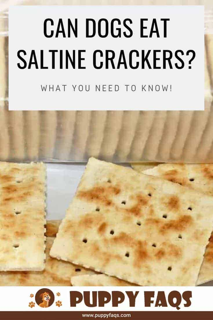 can dogs eat saltine crackers?
