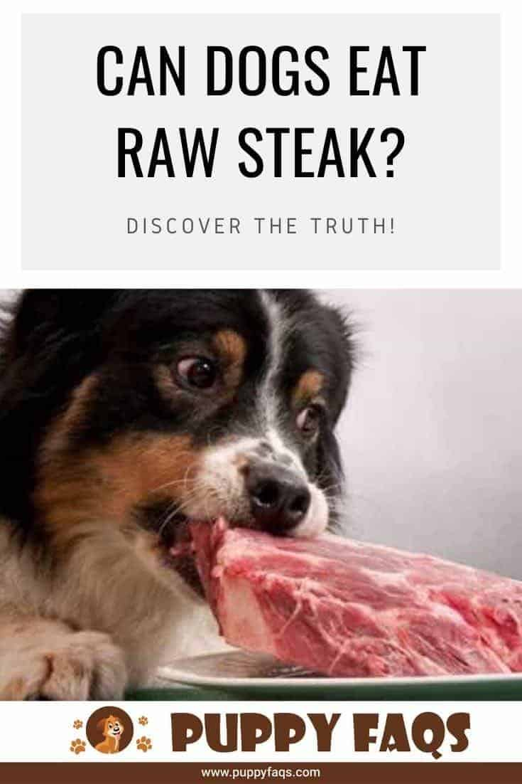 can dogs eat raw steak