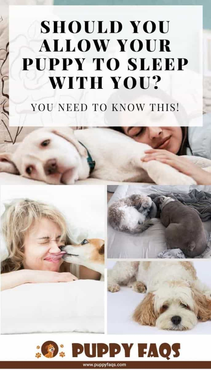 should you let your puppy sleep with you?