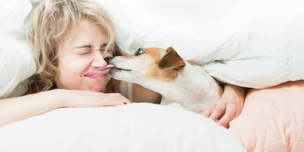 why does my dog lick me at bedtime