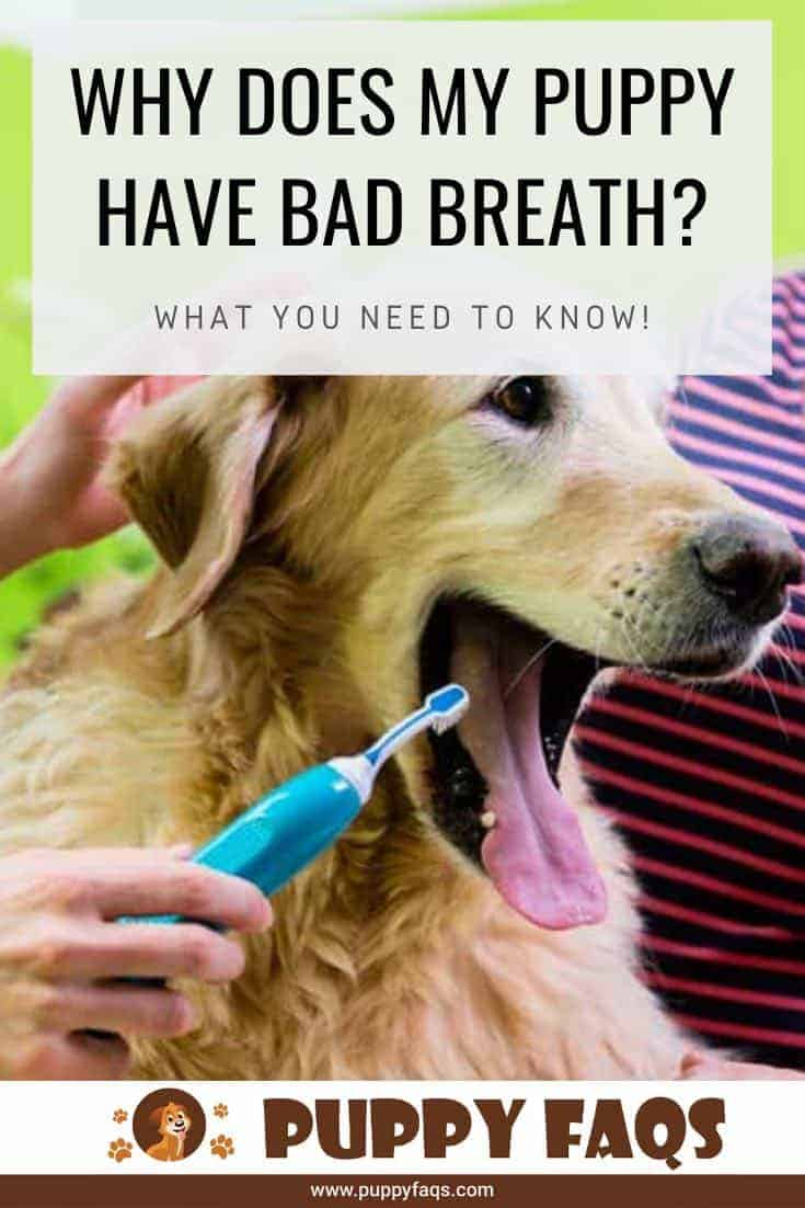 why does my puppy have bad breath?