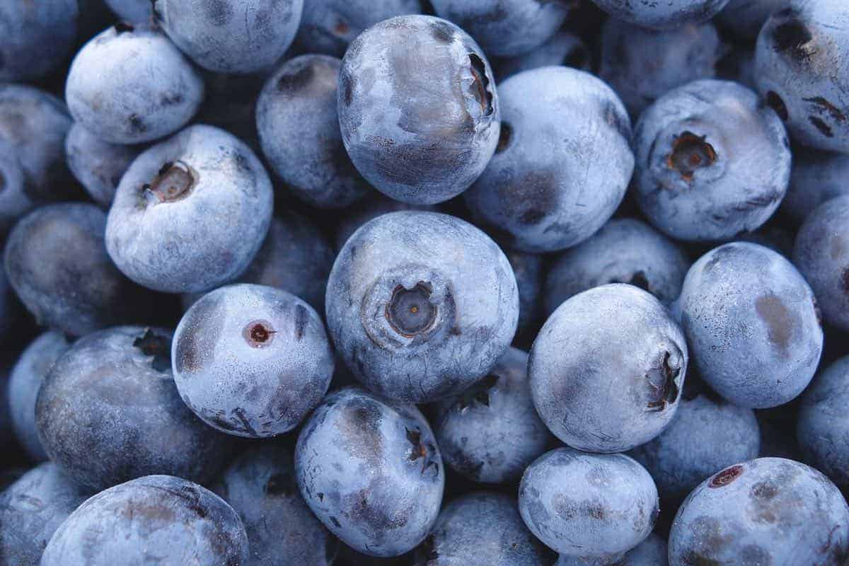 should dogs eat blueberries