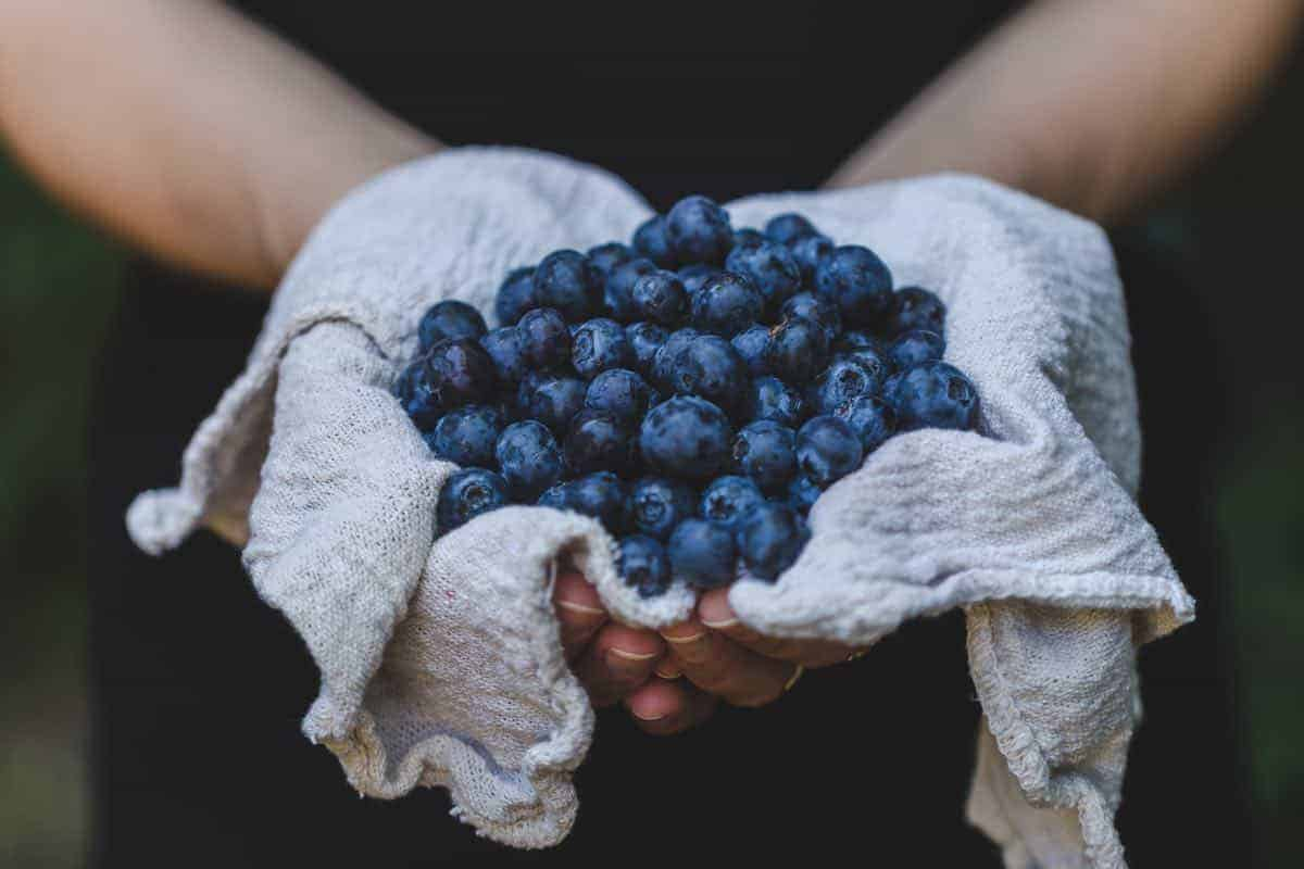 are blueberries safe for dogs