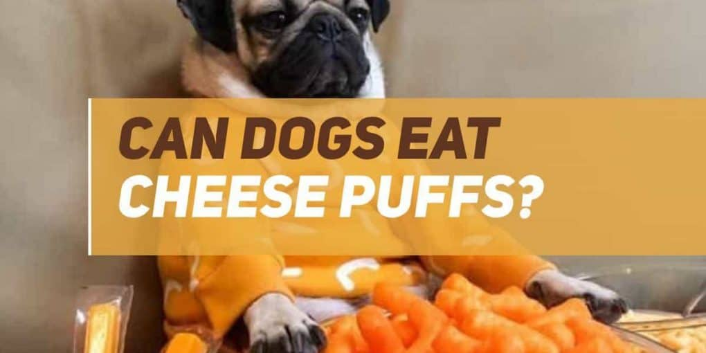 can dogs eat cheese puffs
