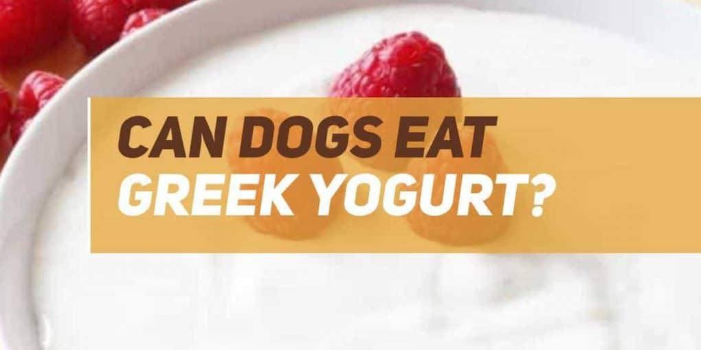 can dogs eat greek yogurt