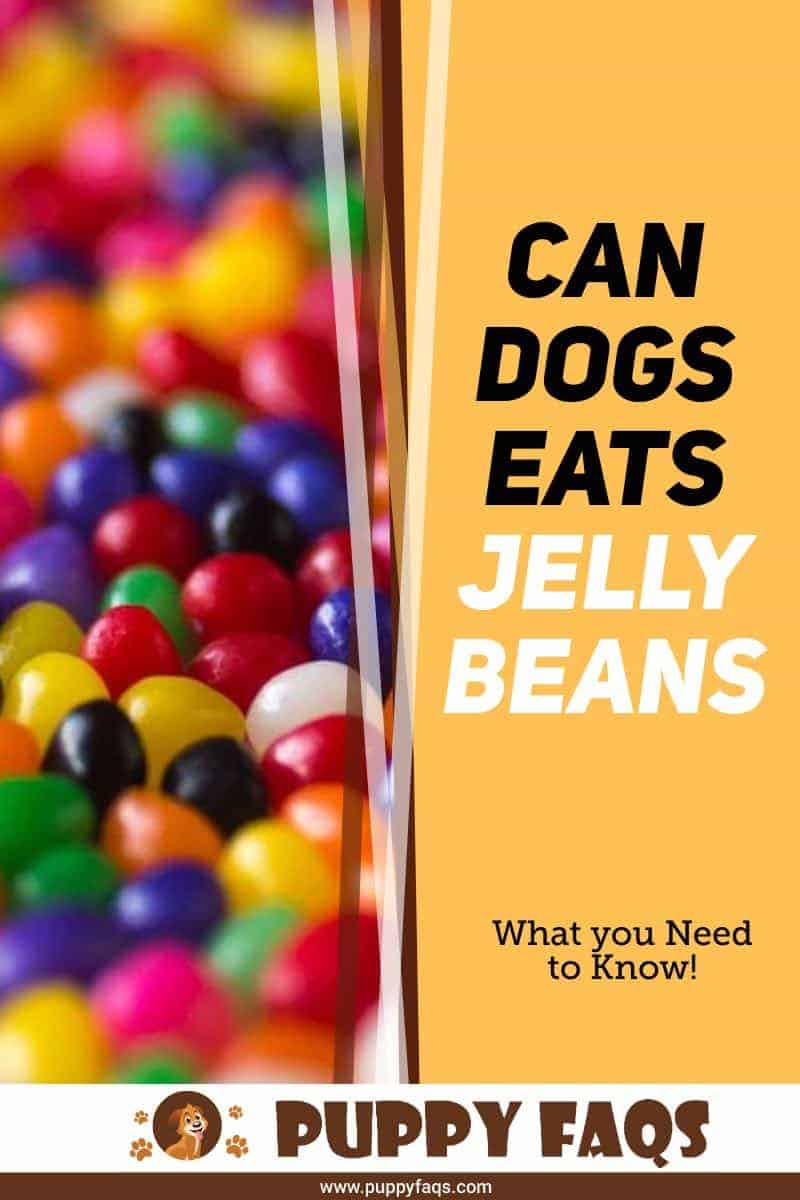 can dogs eat jelly beans