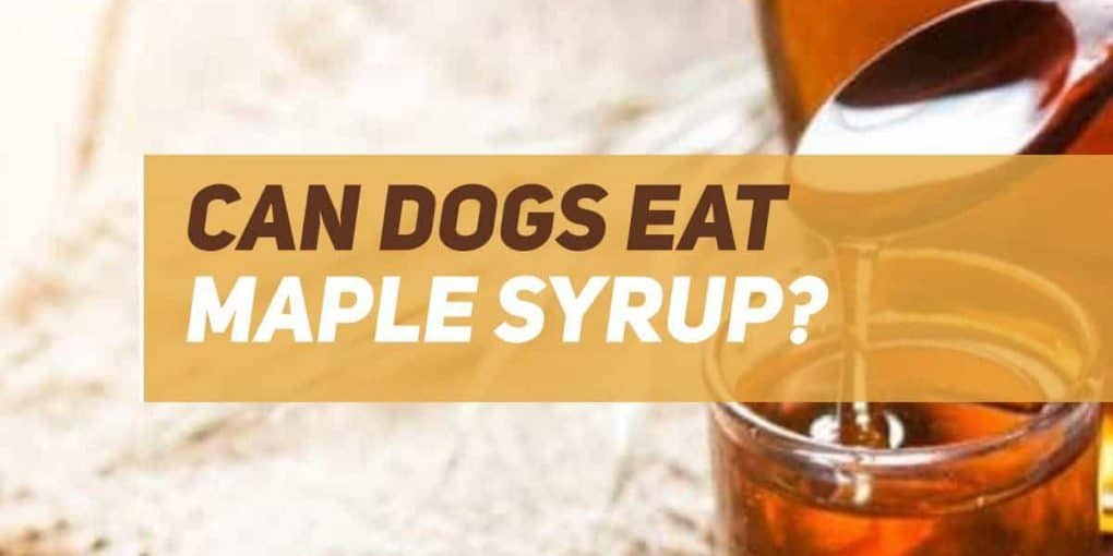 can dogs eat maple syrup