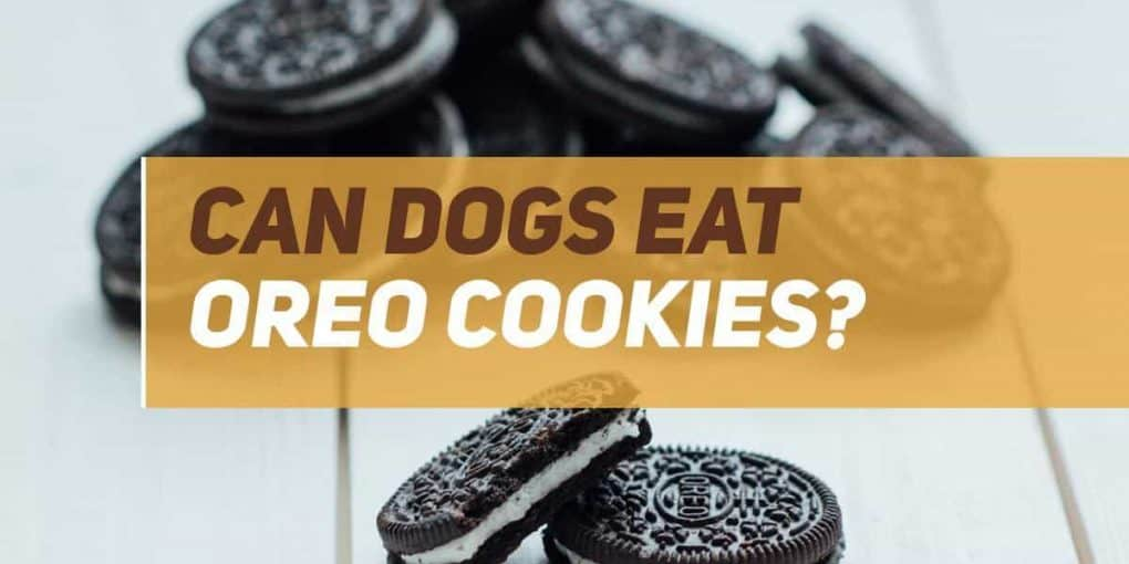 can dogs eat oreo cookies