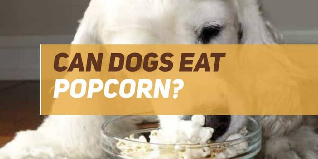 can dogs eat popcorn