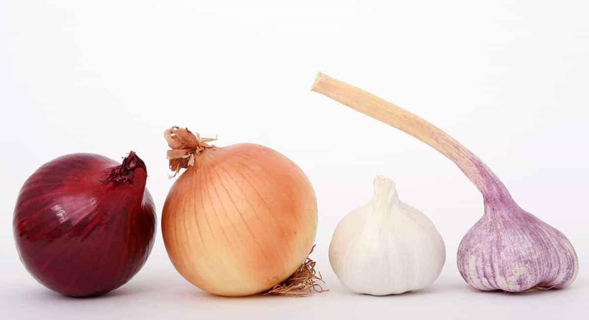 Garlic belongs to the Allium family