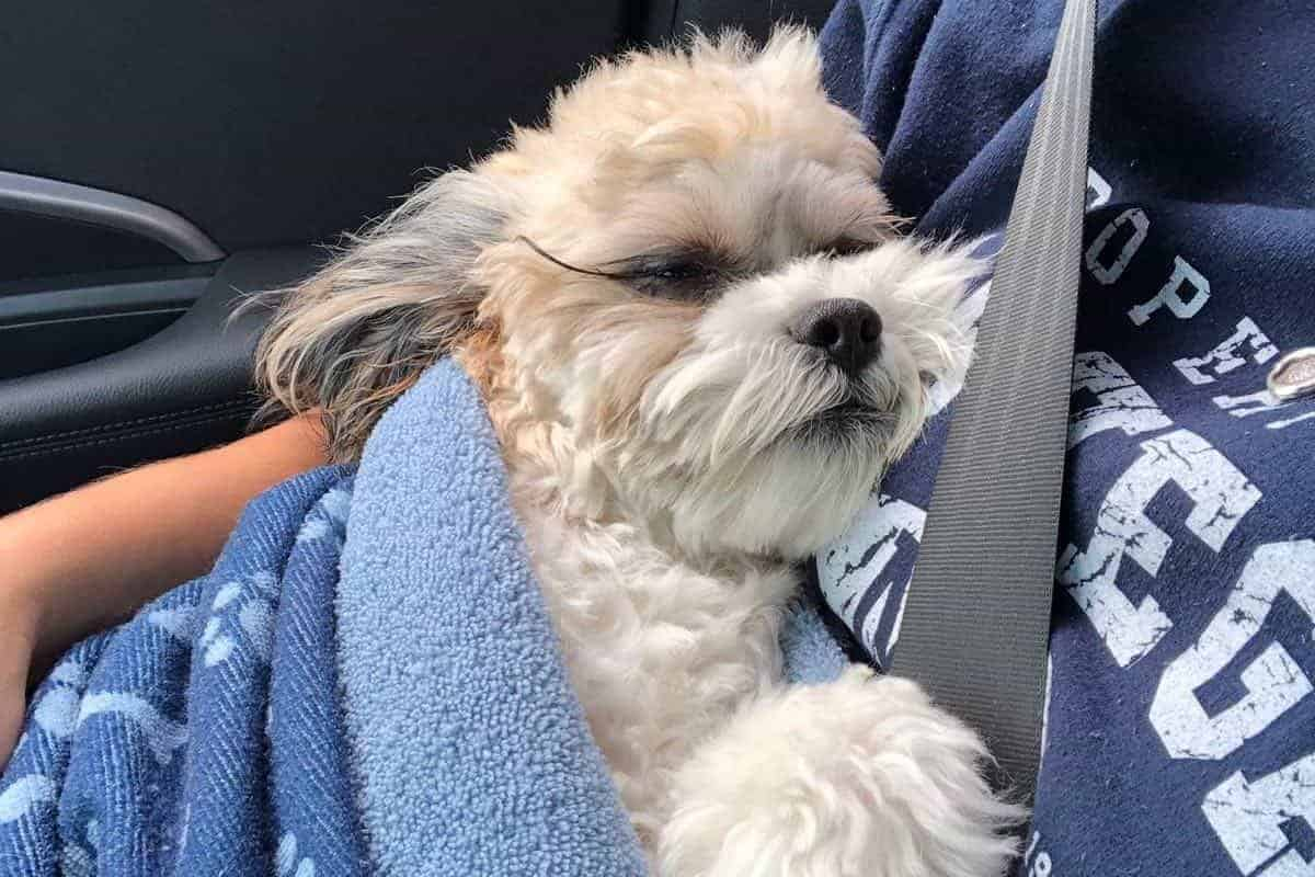 Jimmy coming home after his surgery
