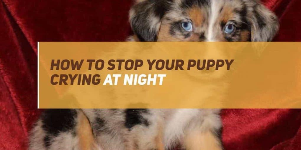 how to stop puppy from crying at night