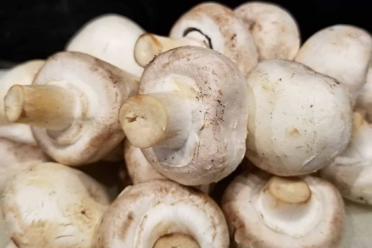 are mushrooms safe for dogs