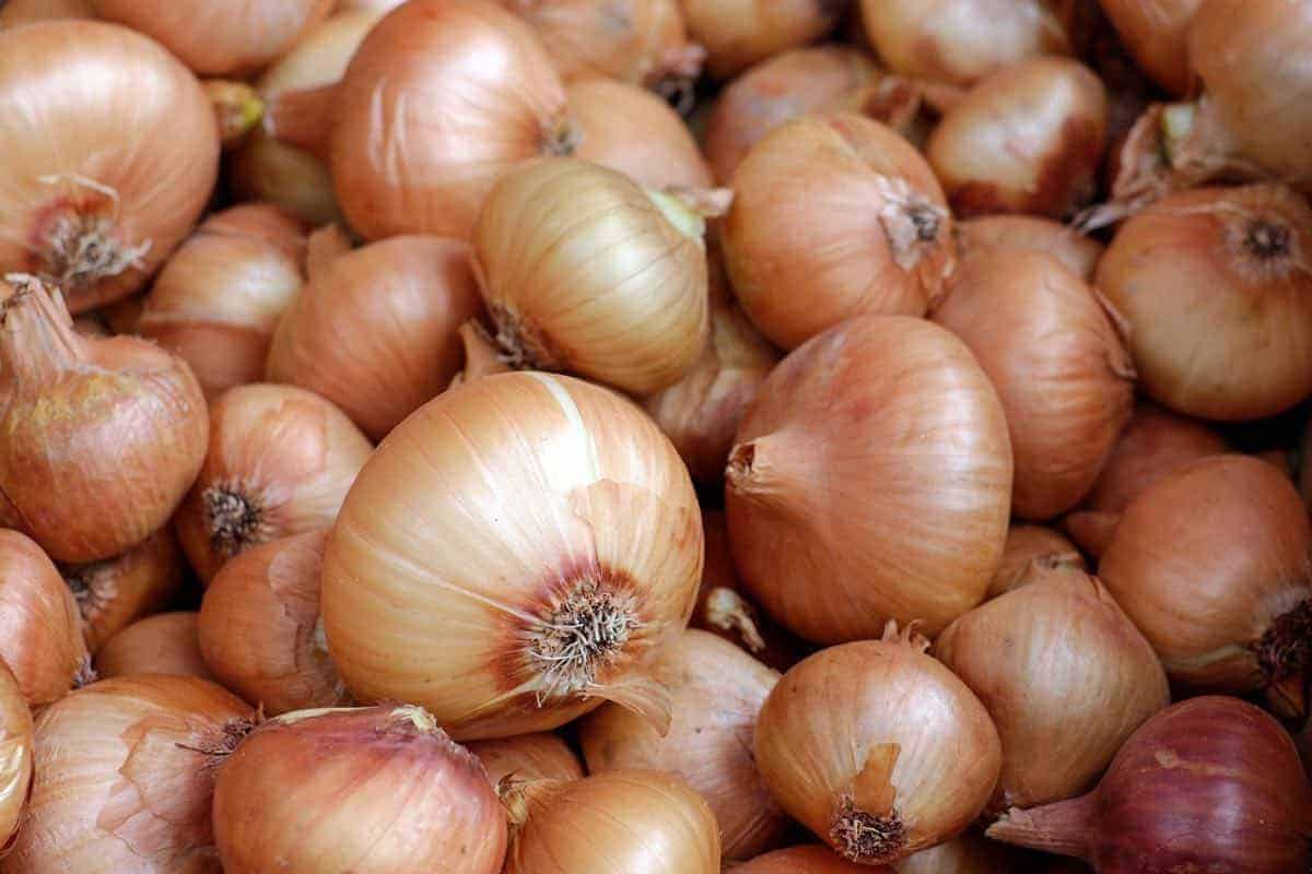 are onions safe for dogs?