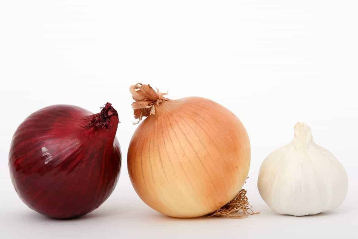 should dogs eat onions