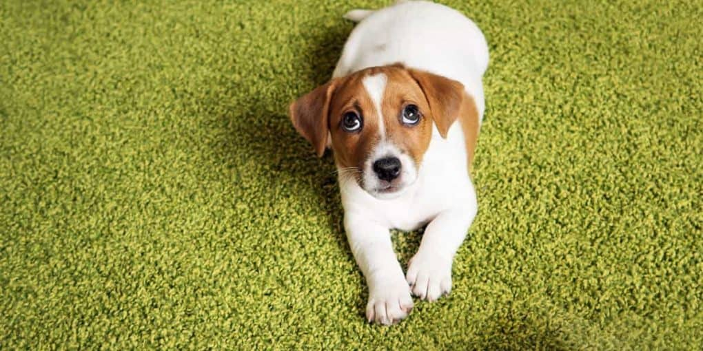 Tips for Potty Training Your New Puppy