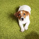 Tips for Potty Training Your New Puppy [Ultimate Guide]