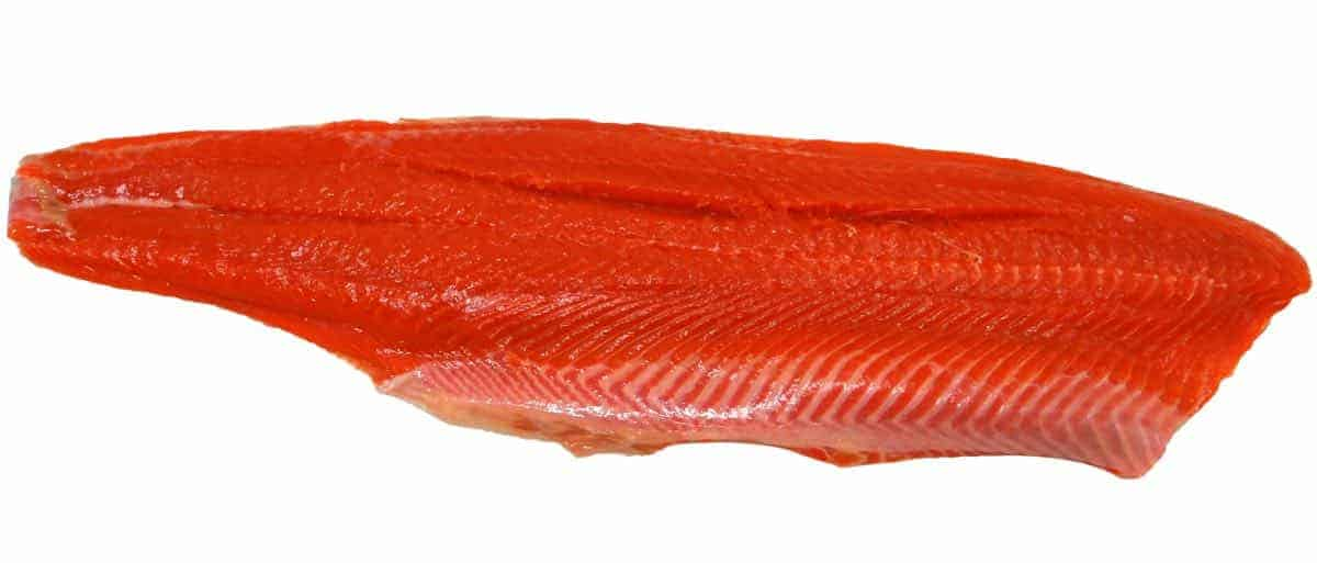 is raw salmon safe for dogs?