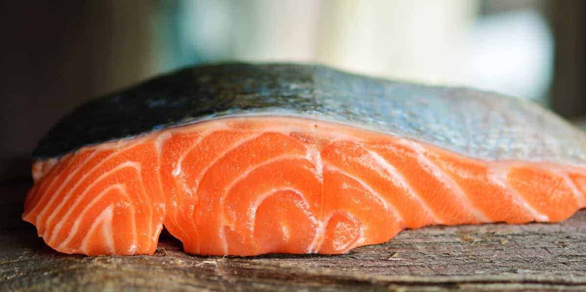 can dogs eat raw salmon?
