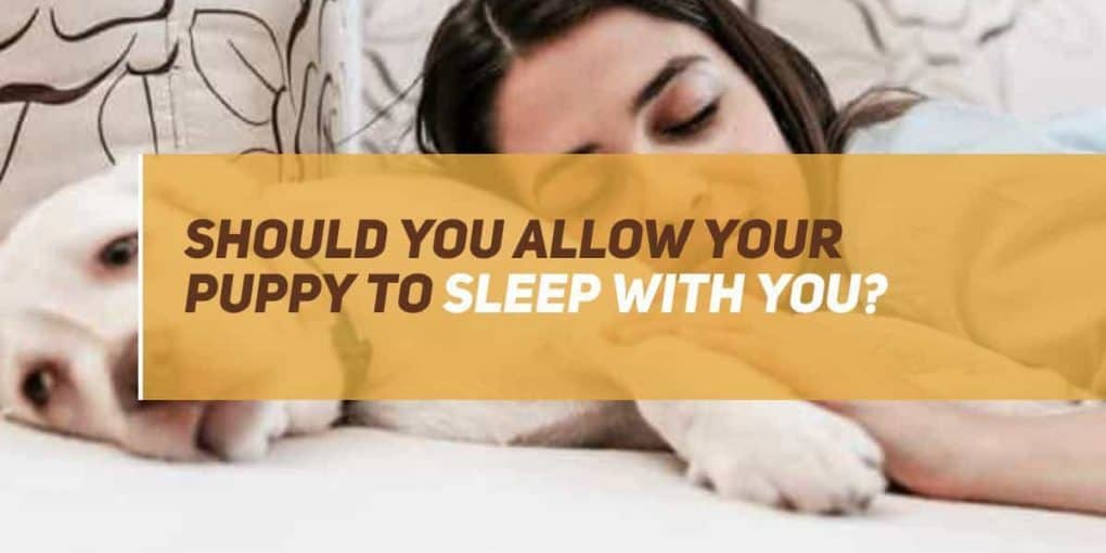 should you allow your puppy to sleep with you