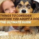 Things to Consider Before You Adopt a Dog [Ultimate Guide]