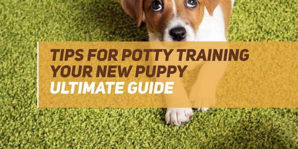 tip for potty training your new puppy