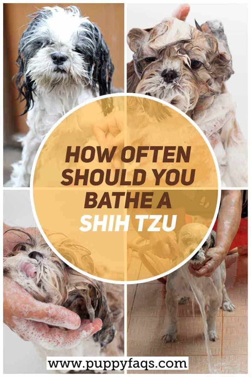 how often should you bathe a shih tzu?