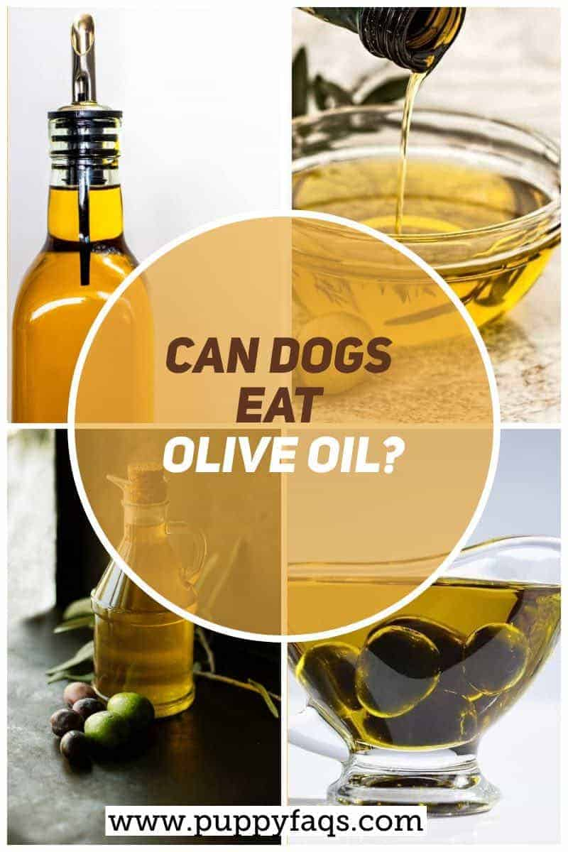 can dogs eat olive oil