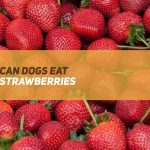 Can Dogs Eat Strawberries?