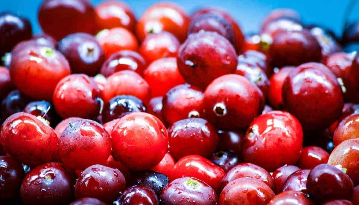are cranberries safe for dogs