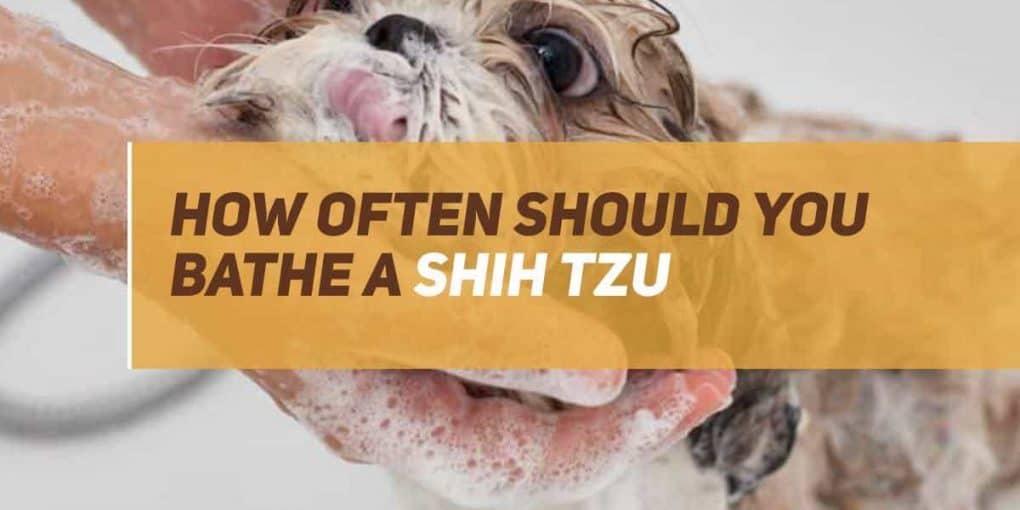 how often should you bathe a shih tzu