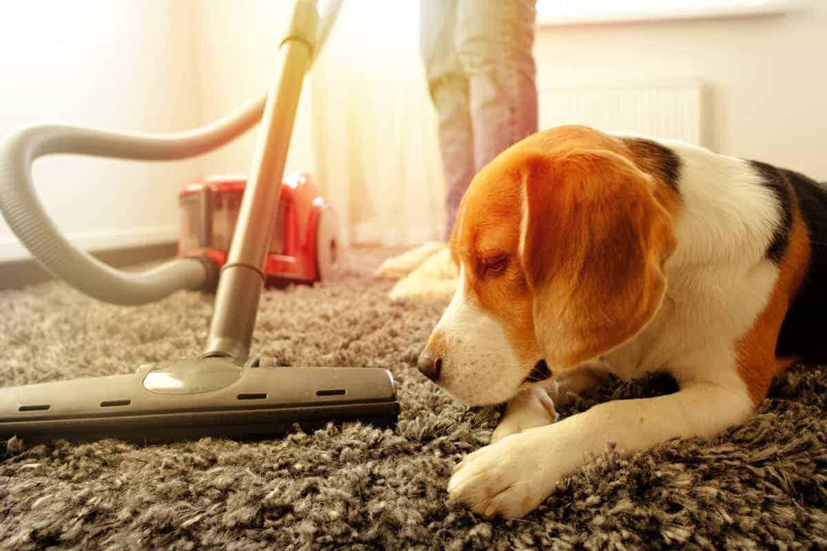 puppy with vacuum