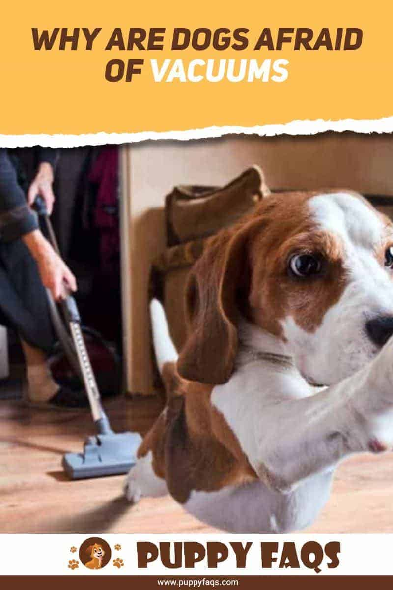 why are dogs afraid of vacuums