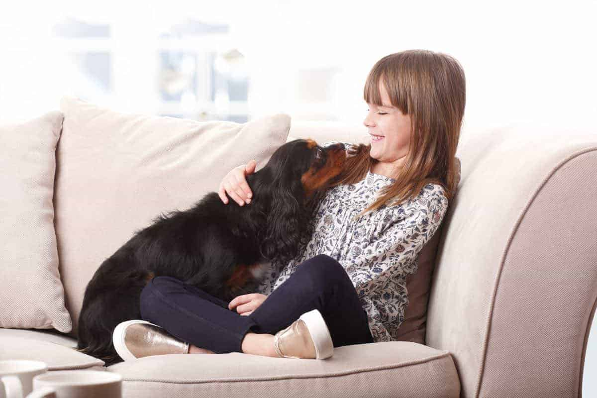 why dogs like to cuddle