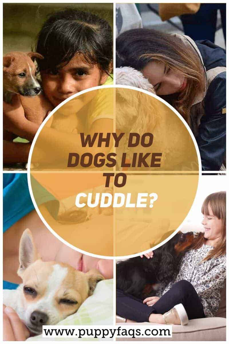why do dogs like to cuddle