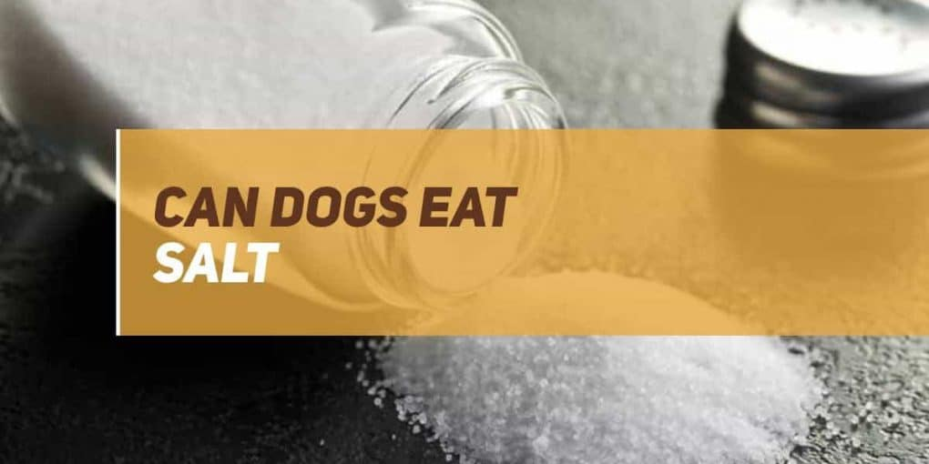 can dogs eat salt