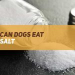 Can Dogs Eat Salt?