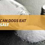 Can Dogs Eat Salt?