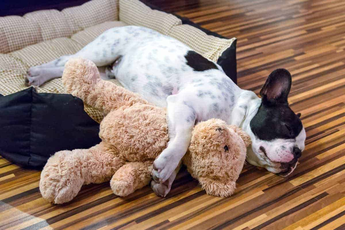 How To Choose the Right Toys for Your Puppy 1