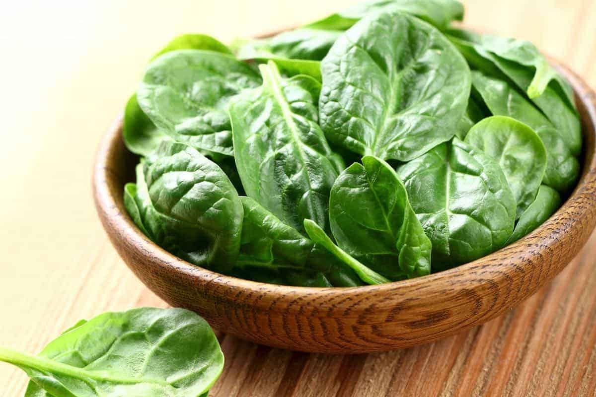 is spinach safe for dogs?