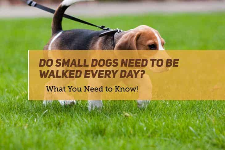 Do Small Dogs Need to Be Walked Every Day?
