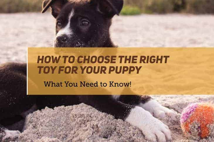 how to choose the right toy for your puppy